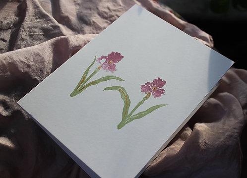 petite iris