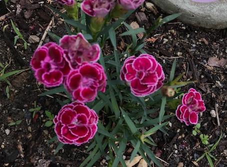 dye garden updates