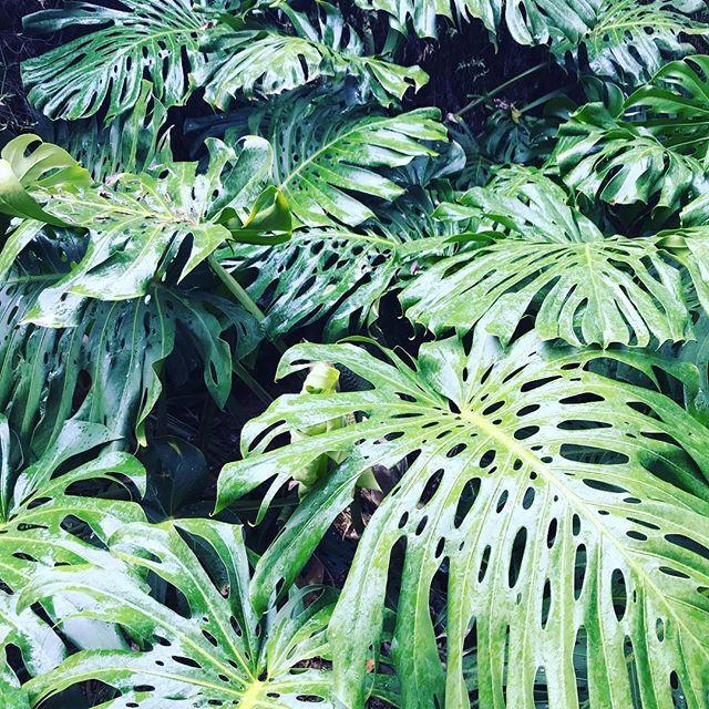 Greens.Leaves.Spring Rain.Deep breathing