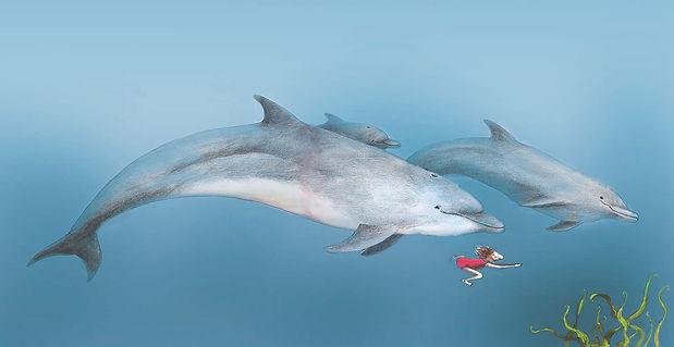dolfijnen willewete dolfijnen barbara van rheenen