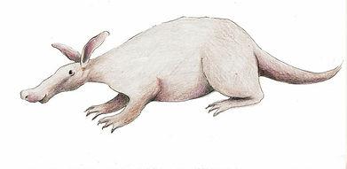 aardvarken.jpg