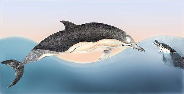 wat is een dolfijn willewete dolfijnen barbara vanrheene