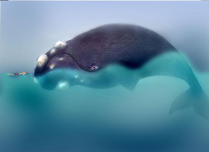 right whale walvis mannetje zee barbara van rheenen willewete walvissen