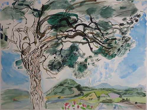 Maremma Pine