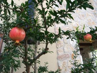お庭の果物