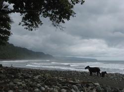 COSTA RICA PARC NAT CORCOVADO 2007