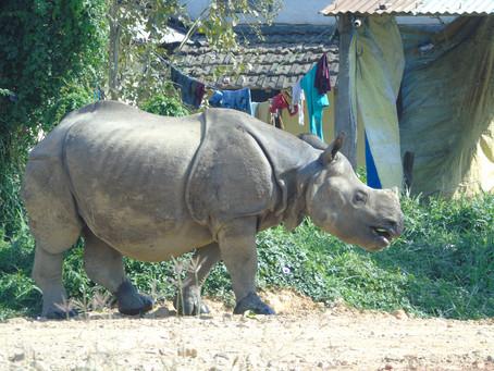 Parc national de Chitwan 2 ❤️❤️❤️