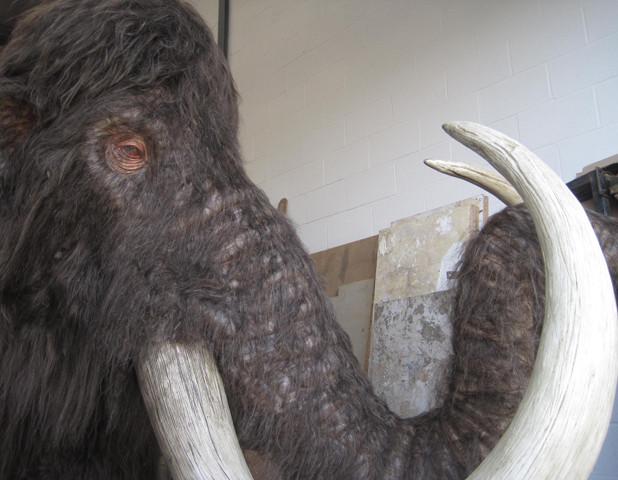 Woolly Mammoth Eyes.jpg