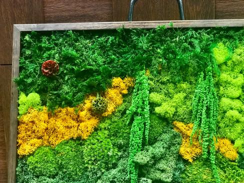 moss, flowers, amaranthus
