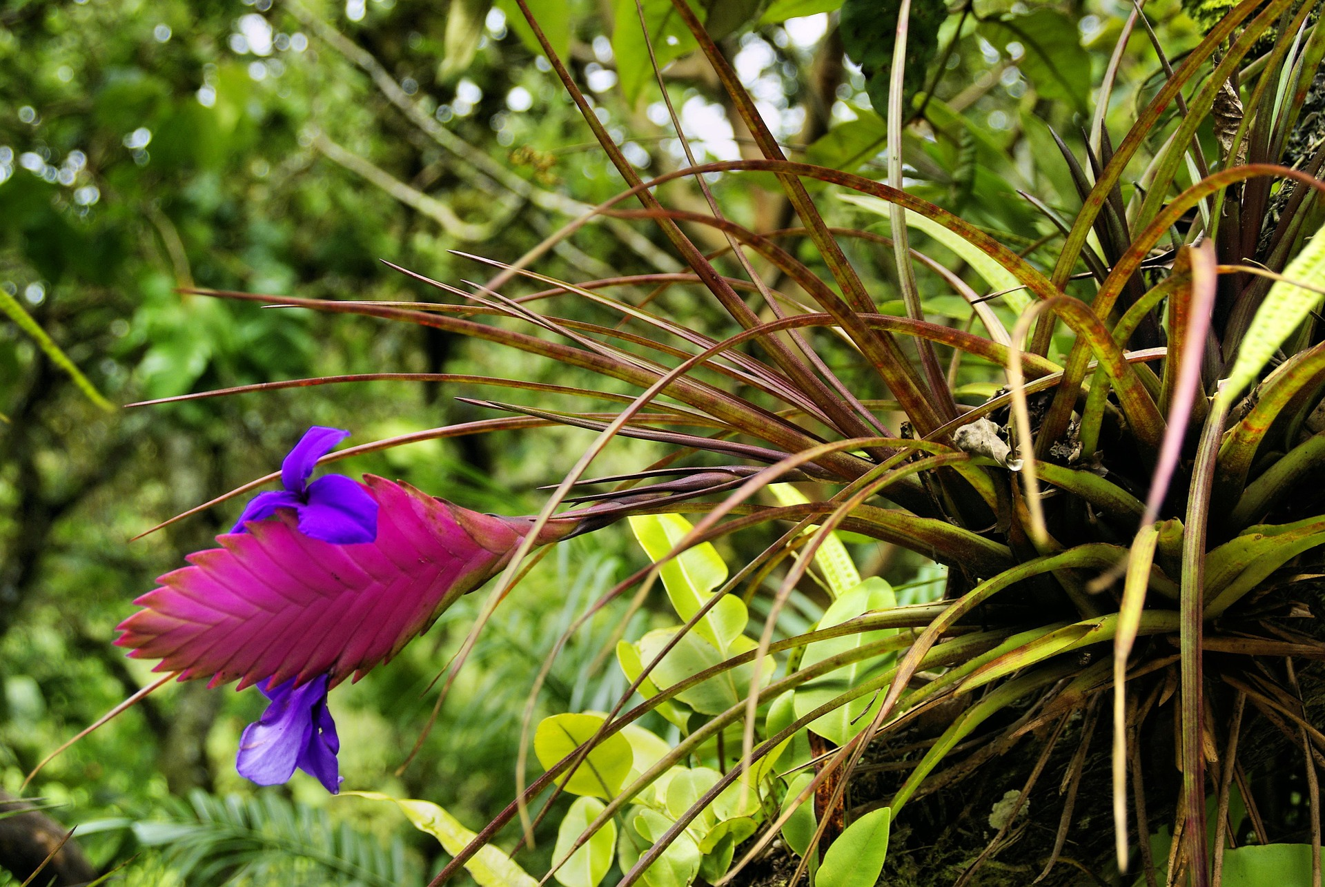 blooming airplant