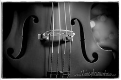 Bass Korpus