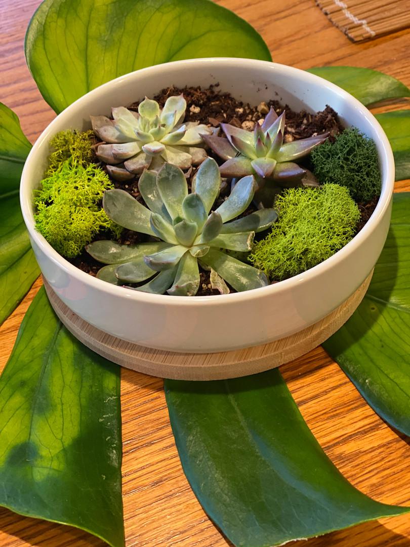 nurture nature succulents