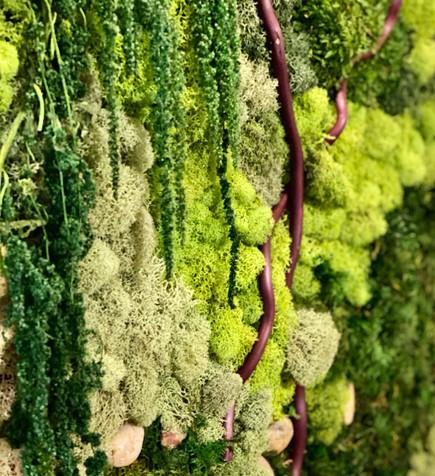 moss, branch detail