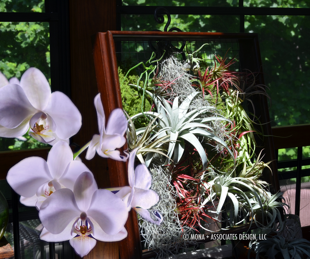 orchid airplant