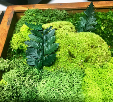 moss with fern