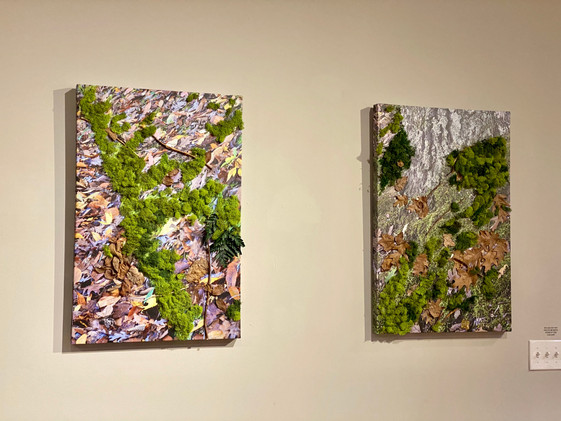 canvas photo, moss and leaves
