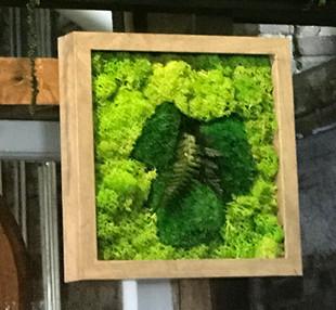 desktop moss frame
