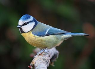 Bird songs of the Neckar River valley