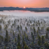 Fog and the smell of taiga