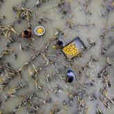 Flood damaged crops