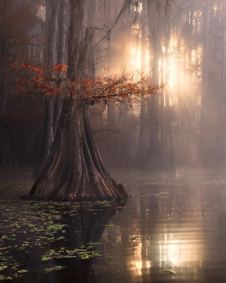 Sentinels of Swamps