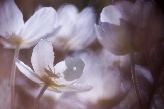 фото: Светлана Иваненко