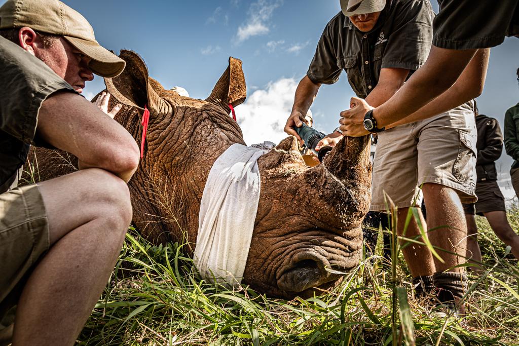 «21st Century Rhino Conservation»