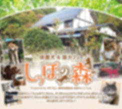 201811_しっぽの森パンフレット.jpg