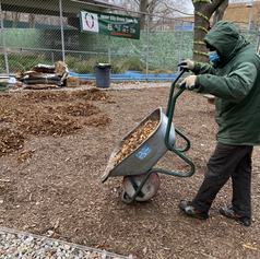 Mulch from the NY Restoration Project