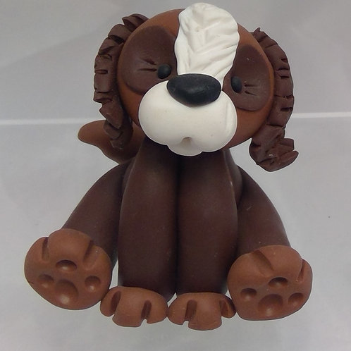 Dark Brown Spaniel with light brown paws