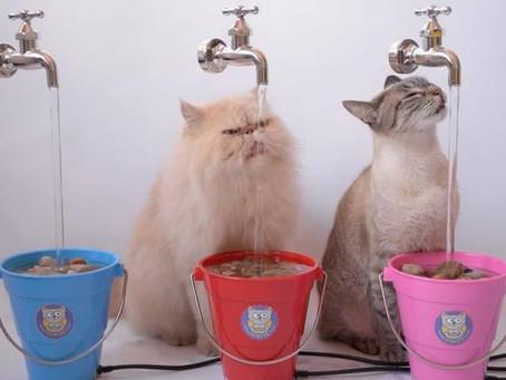 Eles criaram bebedouros para gatos e receberam aporte de R$ 111 milhões