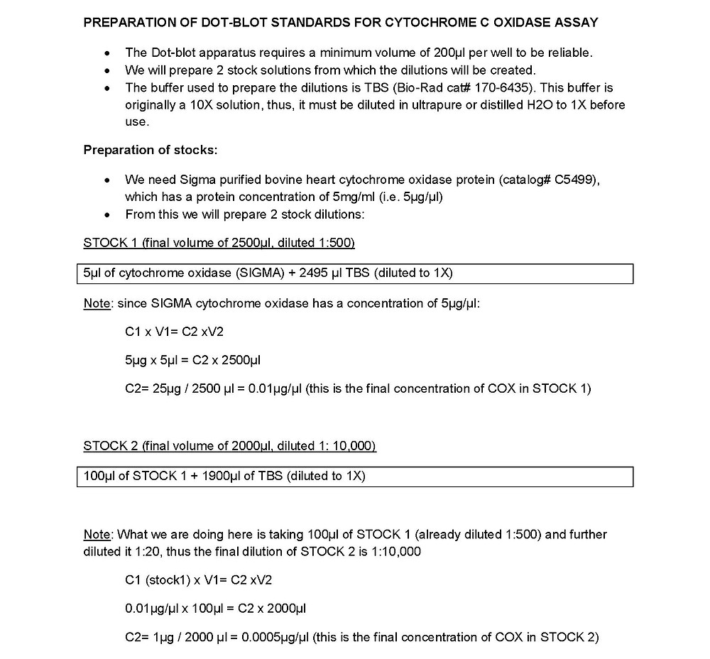 dot-blot dilutions protocol web_Page_2.jpg