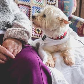 Berühren erlaubt - wie uns Hunde gesund und glücklich machen!