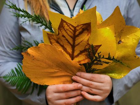 Achtsamkeit: Im Wandel der Jahreszeiten