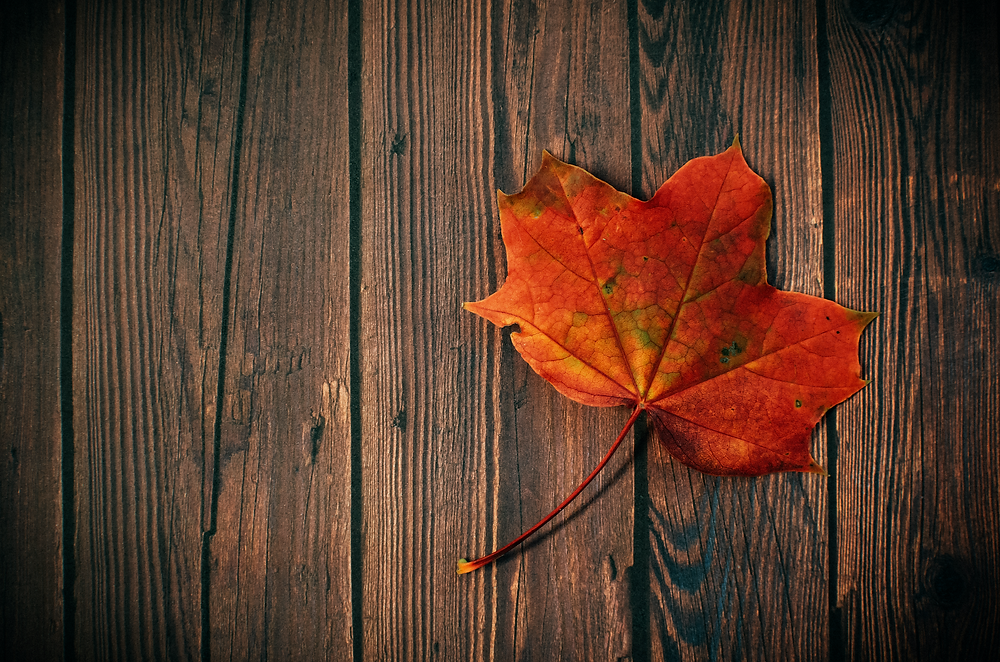 PURE! Das digitale Magazin - Nachhaltige Bodenbeläge für Dein Zuhause!