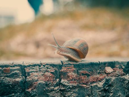 Slow Travel: Mehr als ein Rhythmusgefühl