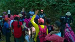 Trekking through the woods