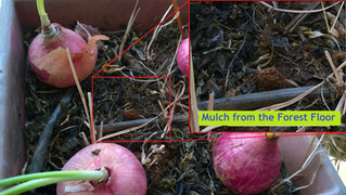 Saving Fruit Tree Seeds - Eat Healthy and Grow a Forest