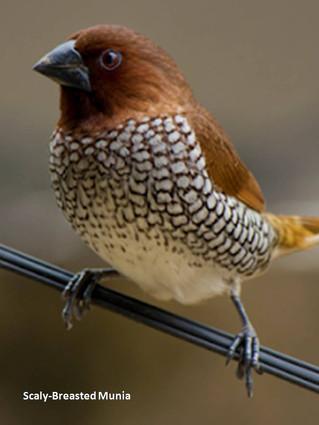 Bird Watching in Mumbai: A hangout in the wild!