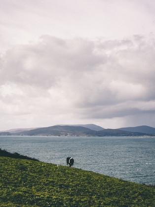 Ireland_6.jpg