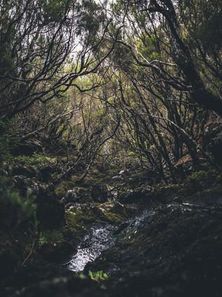 Crossing_Madeira_10.jpg
