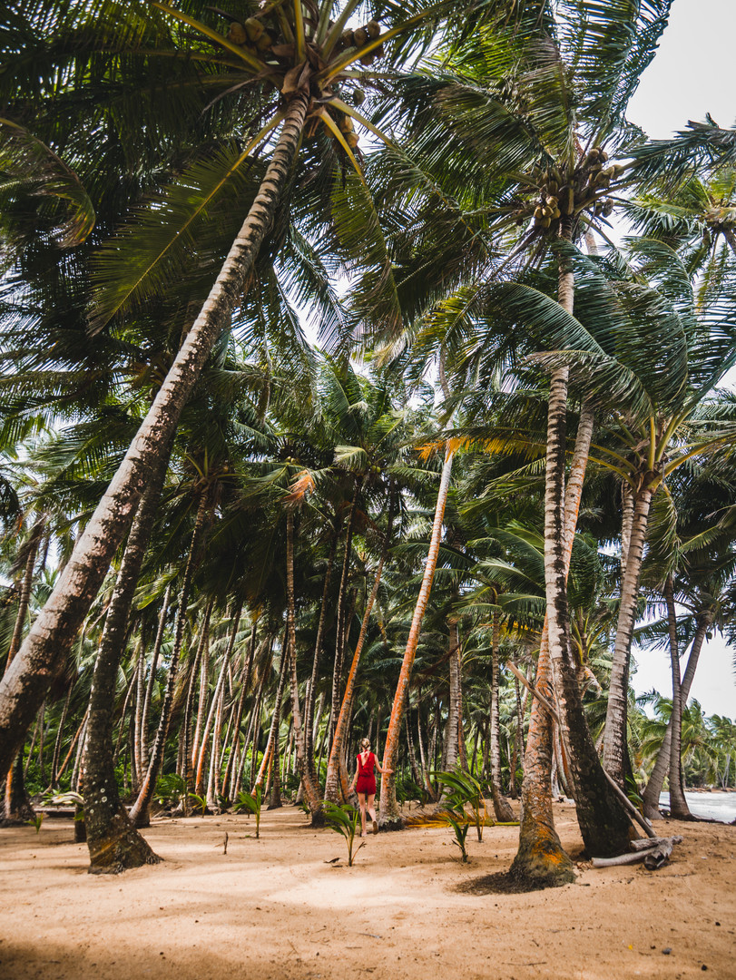 The Palm Forest