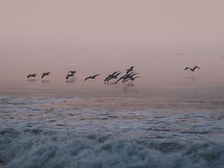 Surfing_El_Paredon_20.jpg
