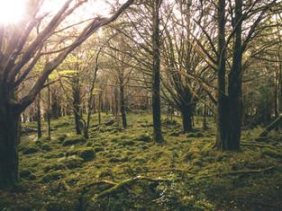 Ireland_13.jpg