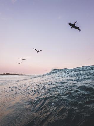 Surfing_El_Paredon_23.jpg