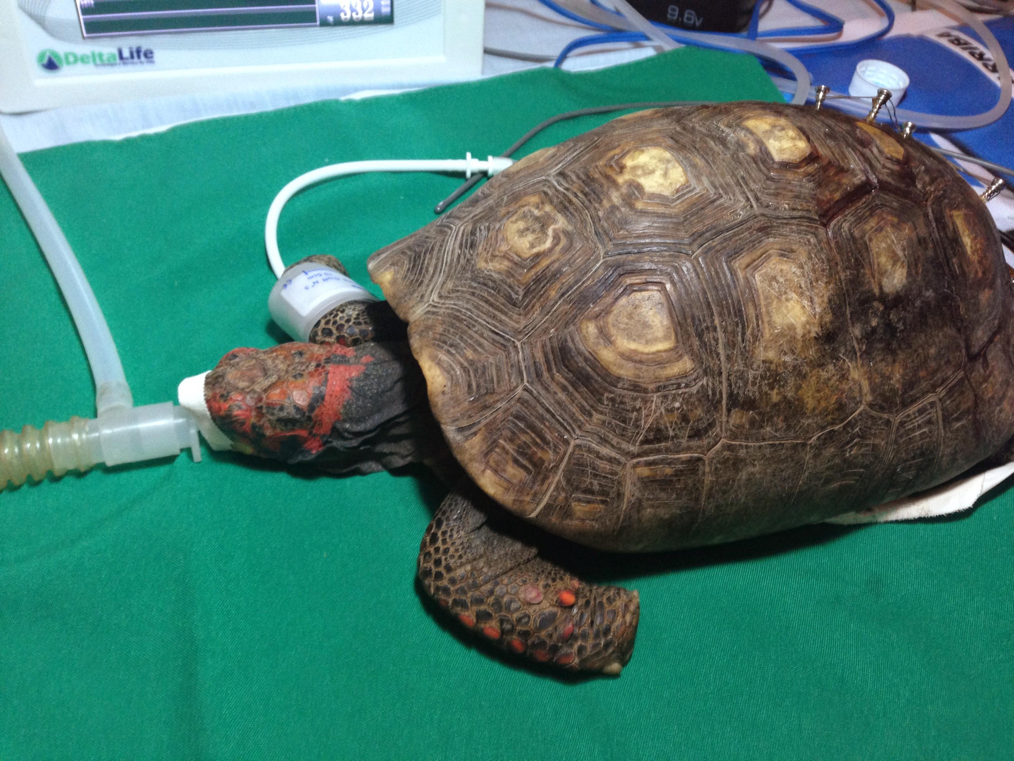Anestesia em Jabutipiranga