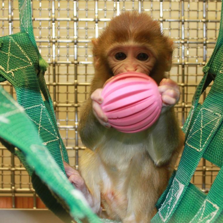 Enriquecimento para Primatas - Wisconsin National Primate Research Center