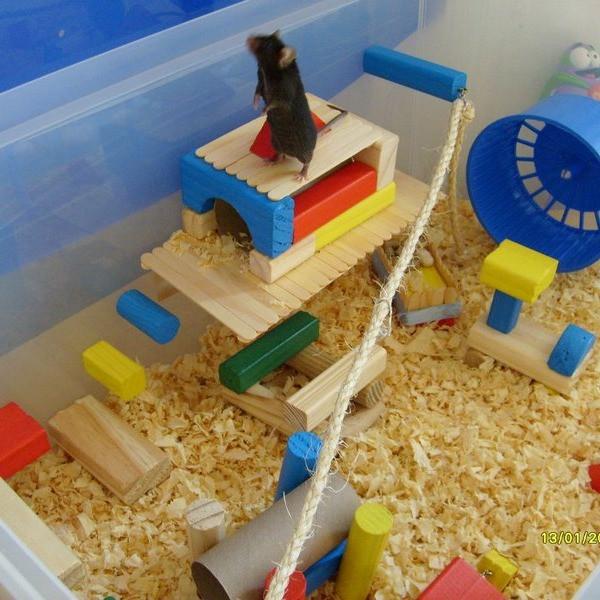 Enriquecimento para Camundongos - Foto de Pet Mais Feliz