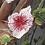 Thumbnail: Blusa Tule Bordado Floral FG 4568