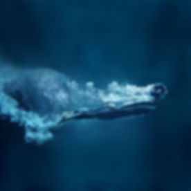Underwater Dive